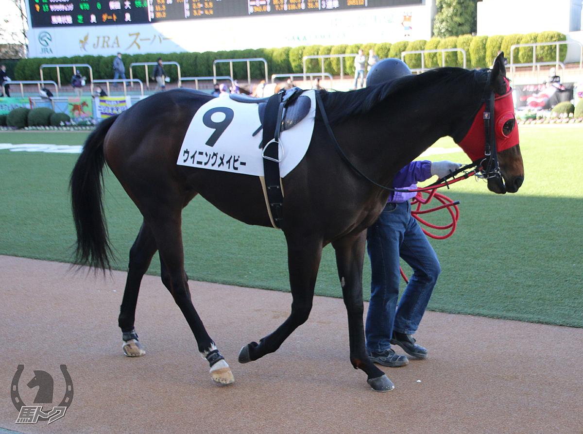 ウイニングメイビーの馬体写真