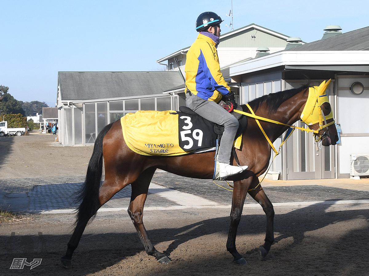 コニカルビーカーの馬体写真