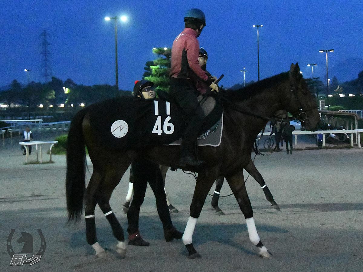 ルモンドの馬体写真