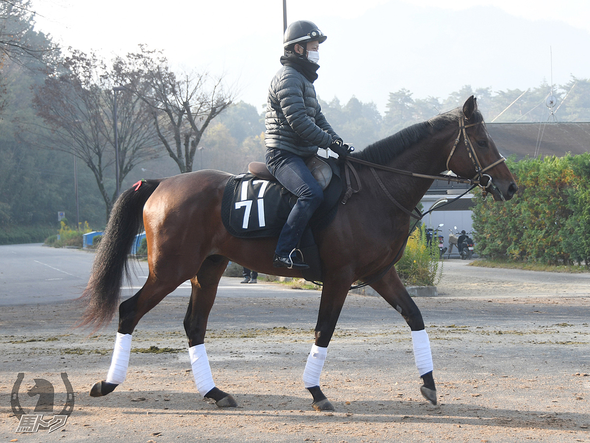 ブルーノバローズの馬体写真