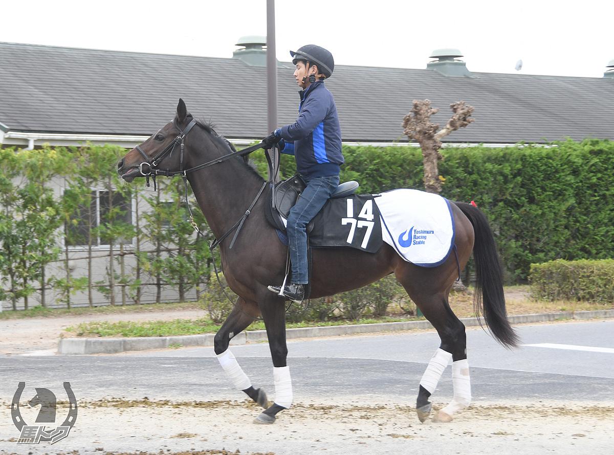 プリモプレミオの馬体写真
