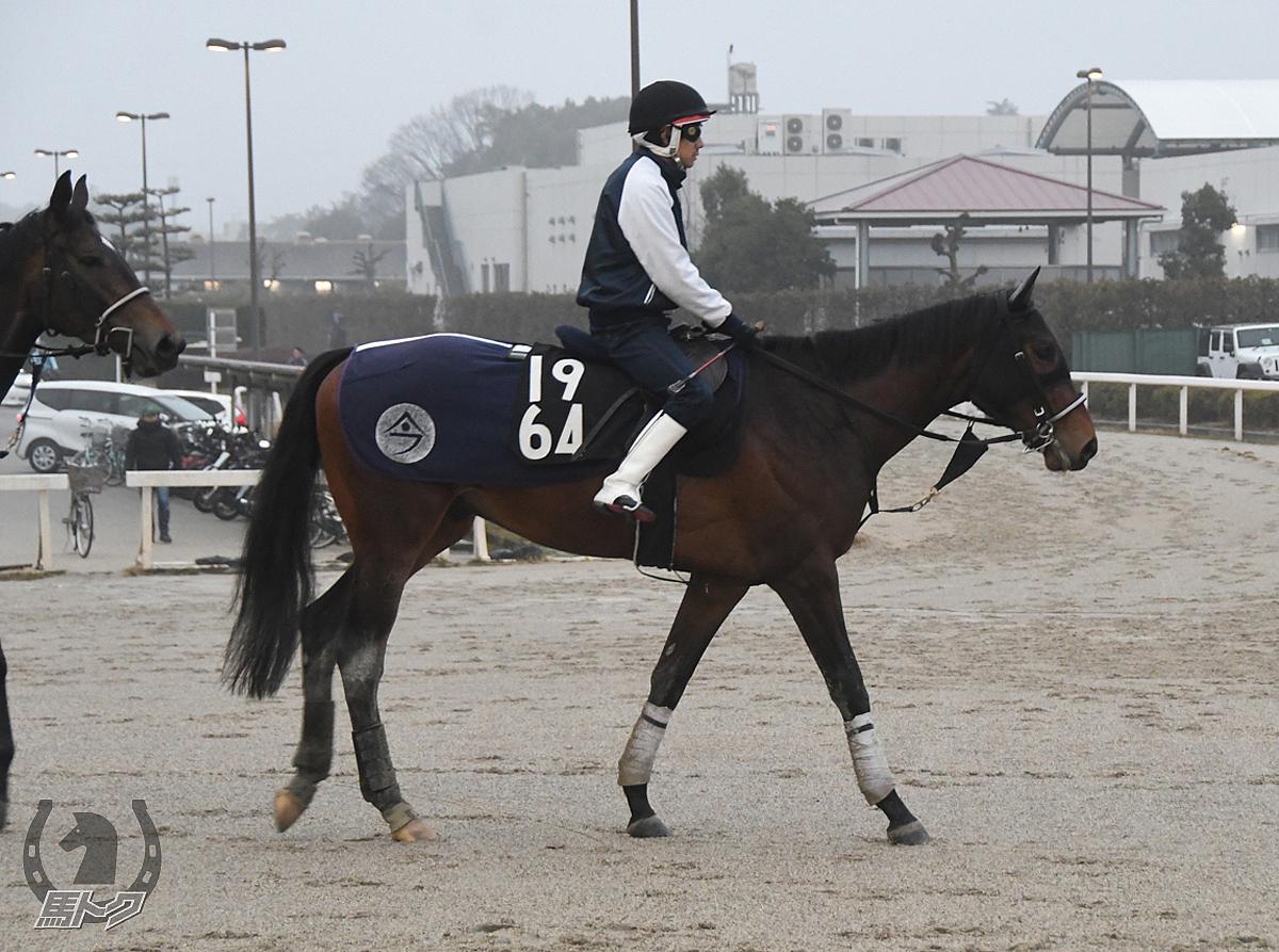 シャンパンクーペの馬体写真