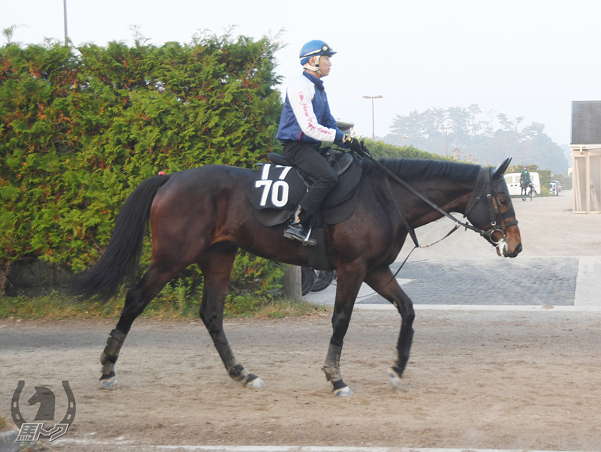 ショウナンアーサーの馬体写真