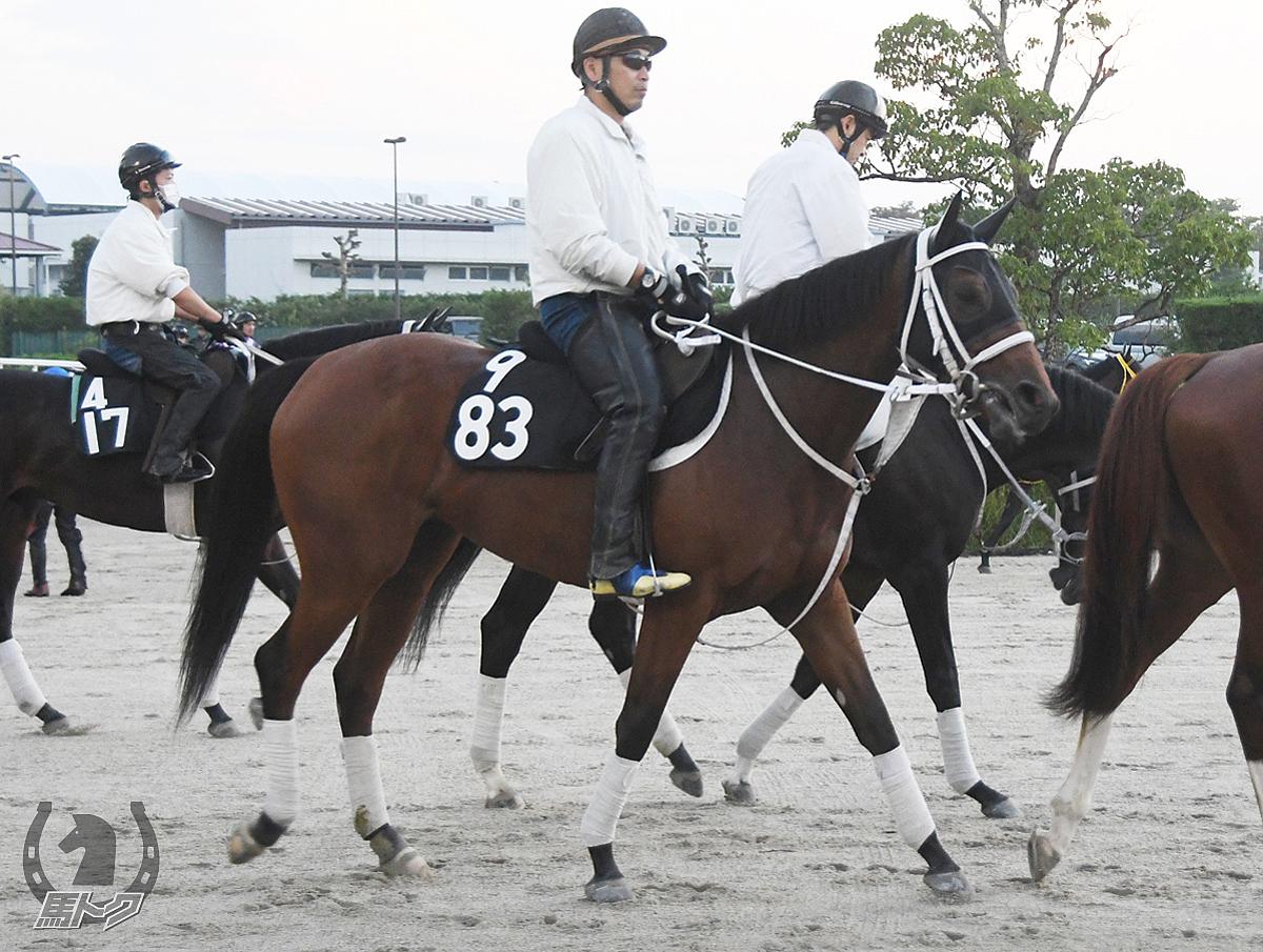 ミエルミエーレの馬体写真