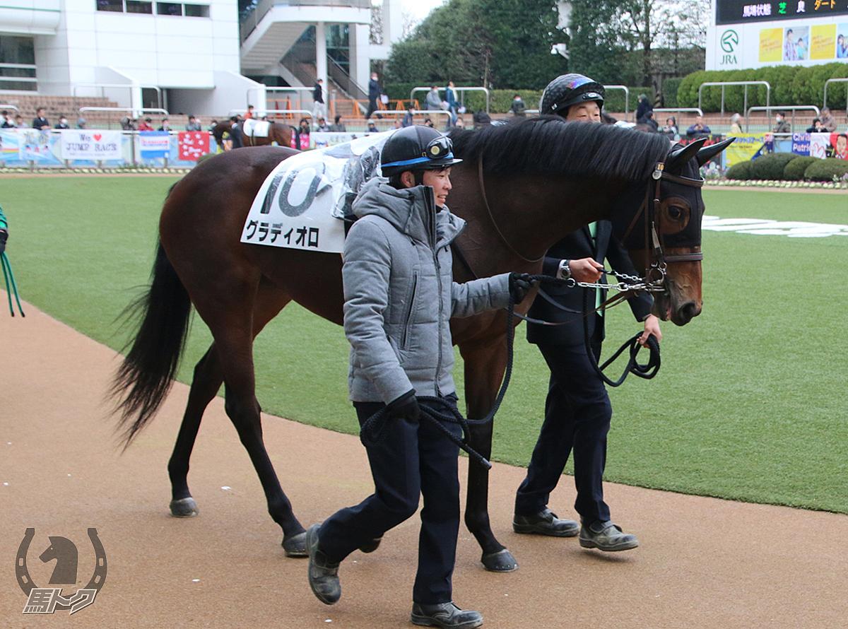 グラディオロの馬体写真