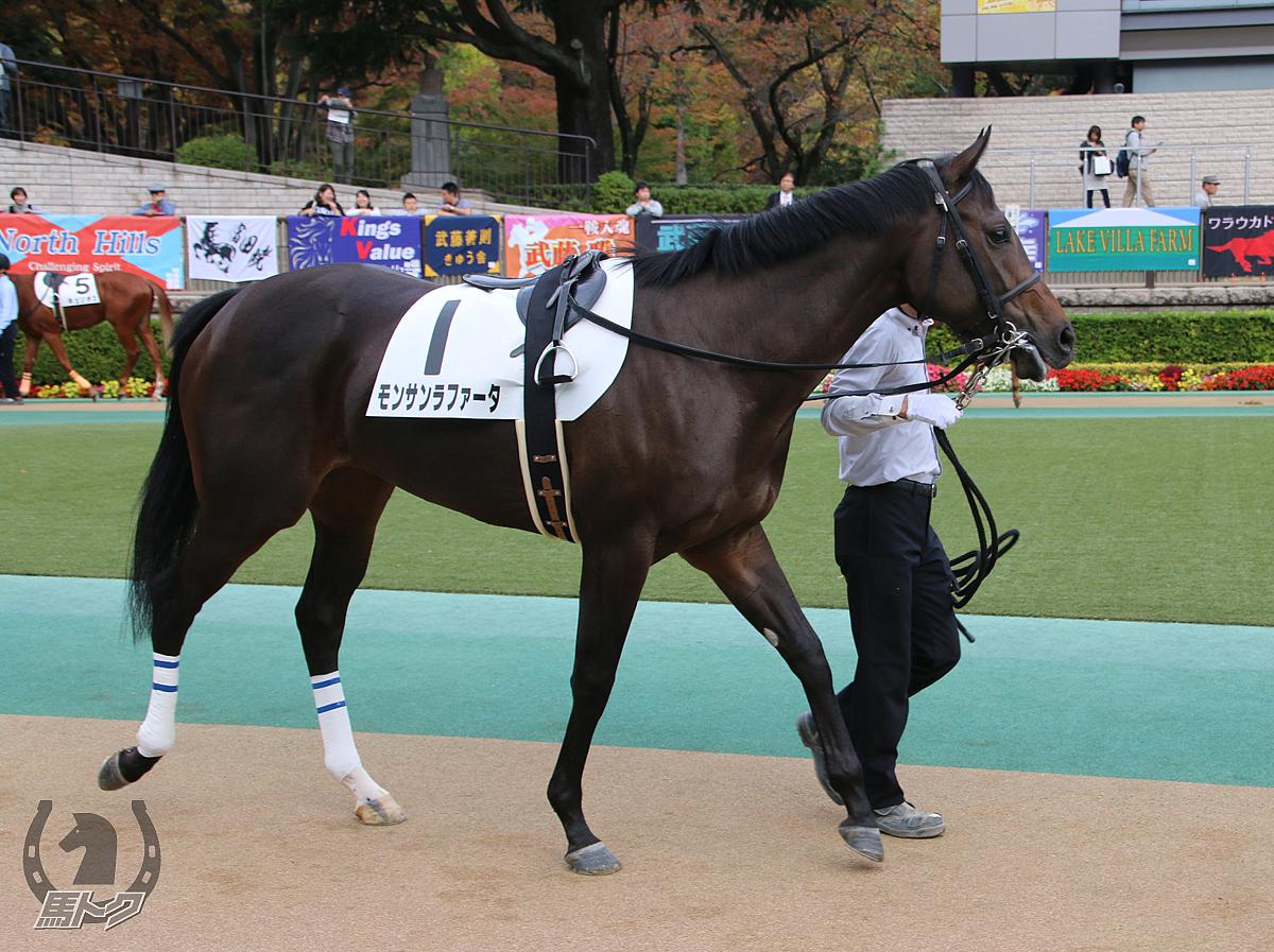モンサンラファータの馬体写真