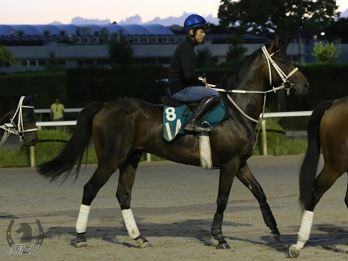 ダノンレグナムの馬体写真