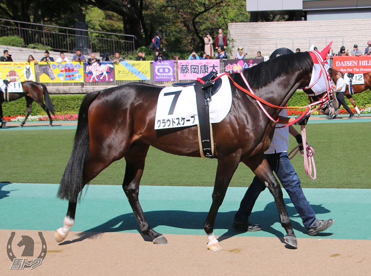 クラウドスケープの馬体写真