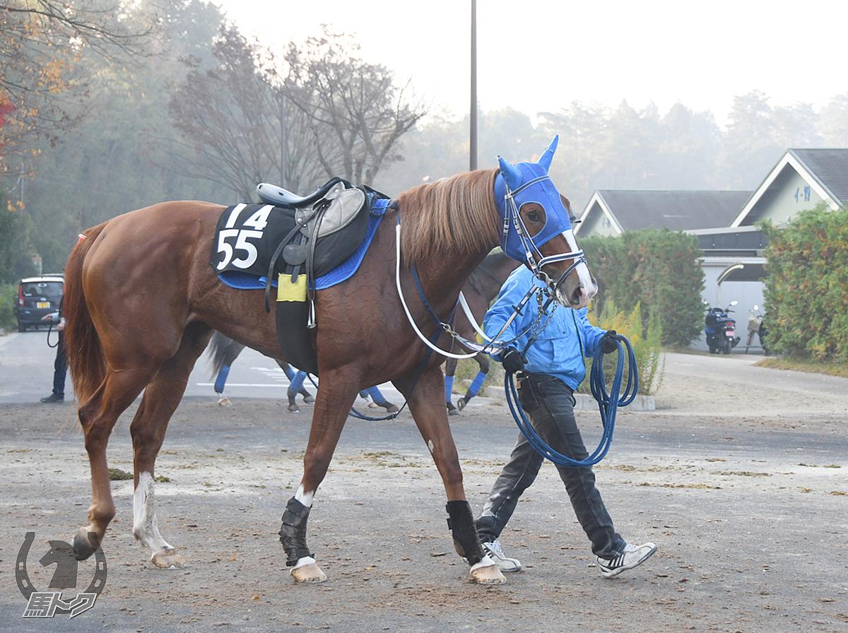 アルバリズムの馬体写真