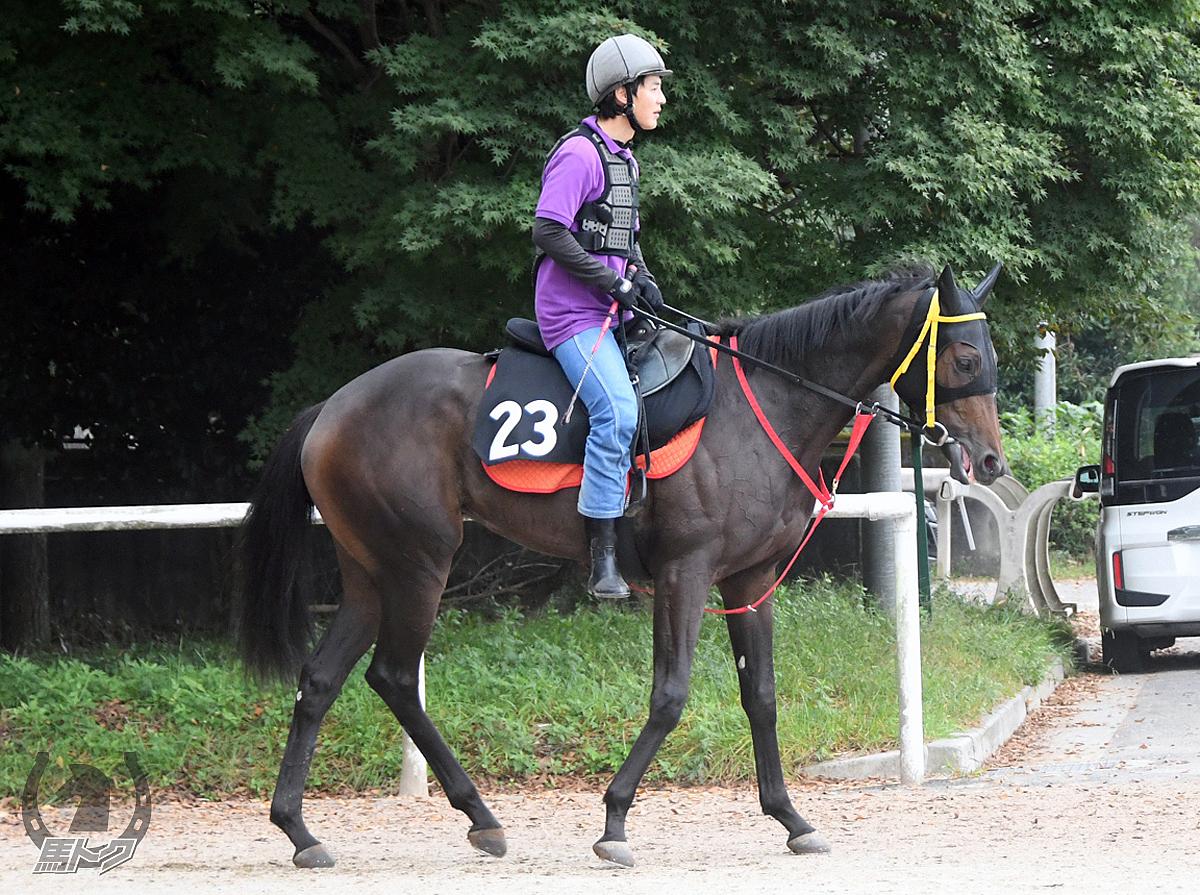 アカマの馬体写真
