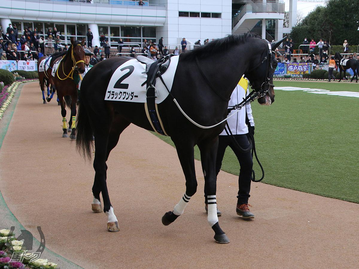 ブラックワンダーの馬体写真