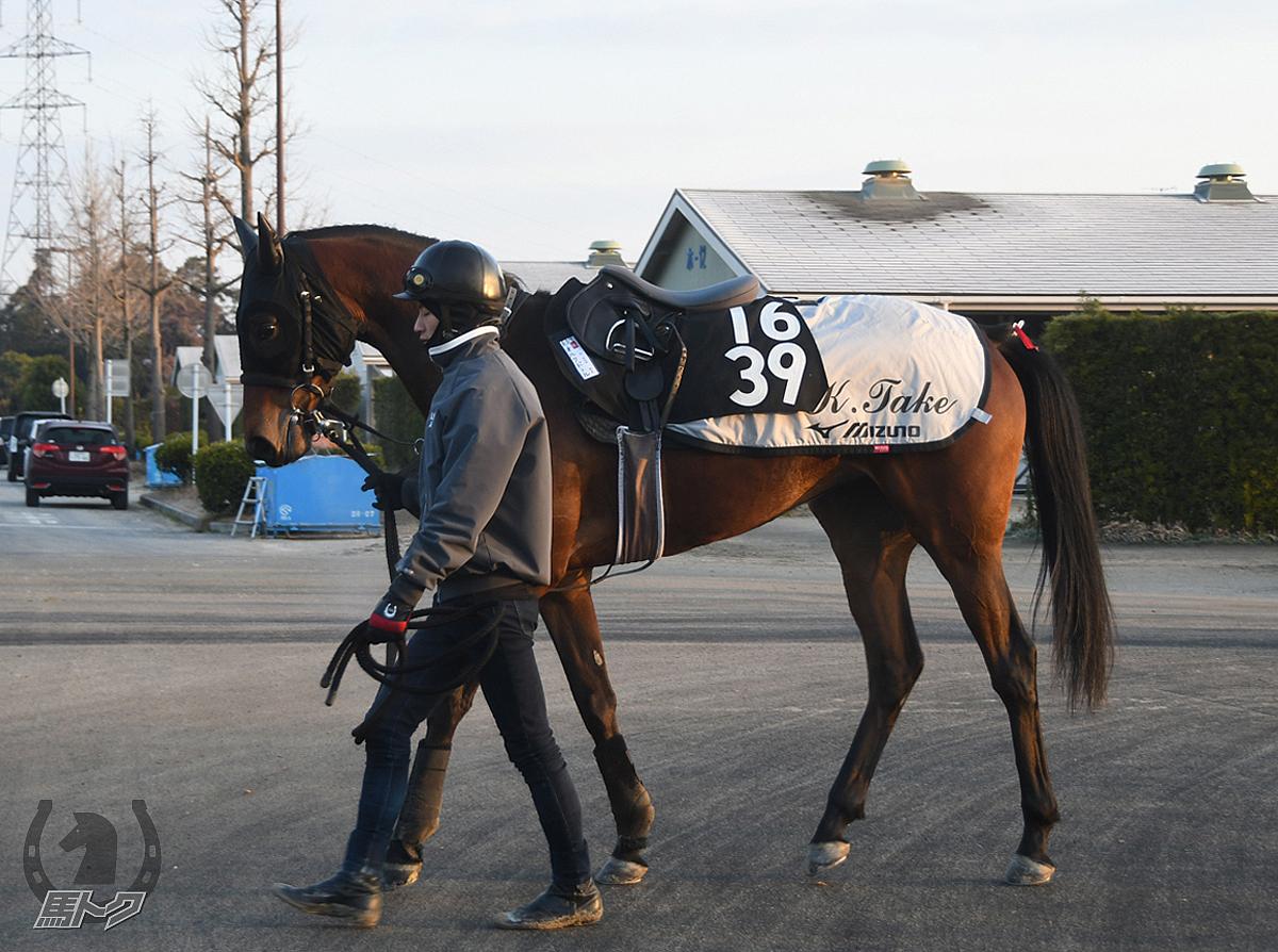 オルクドールの馬体写真