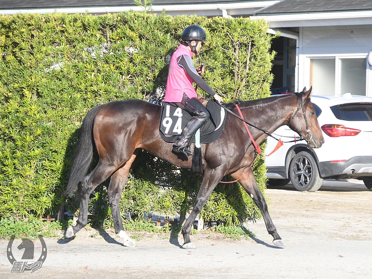 フィッツロイシチーの馬体写真