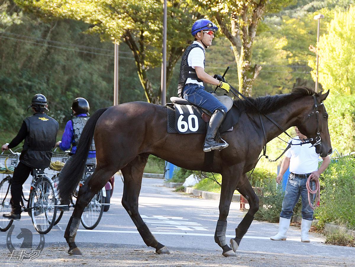 レッドアルビオンの馬体写真