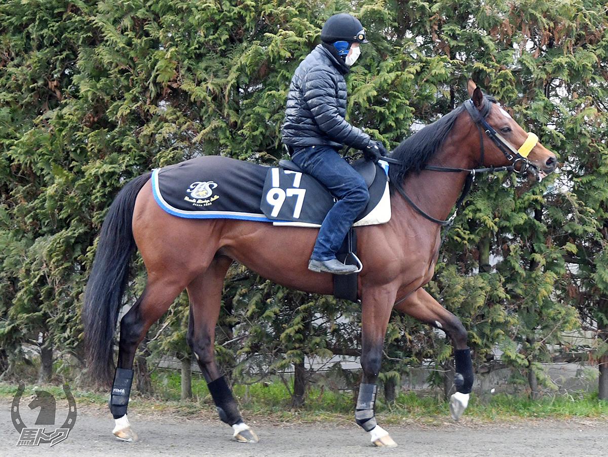 ボマイェの馬体写真