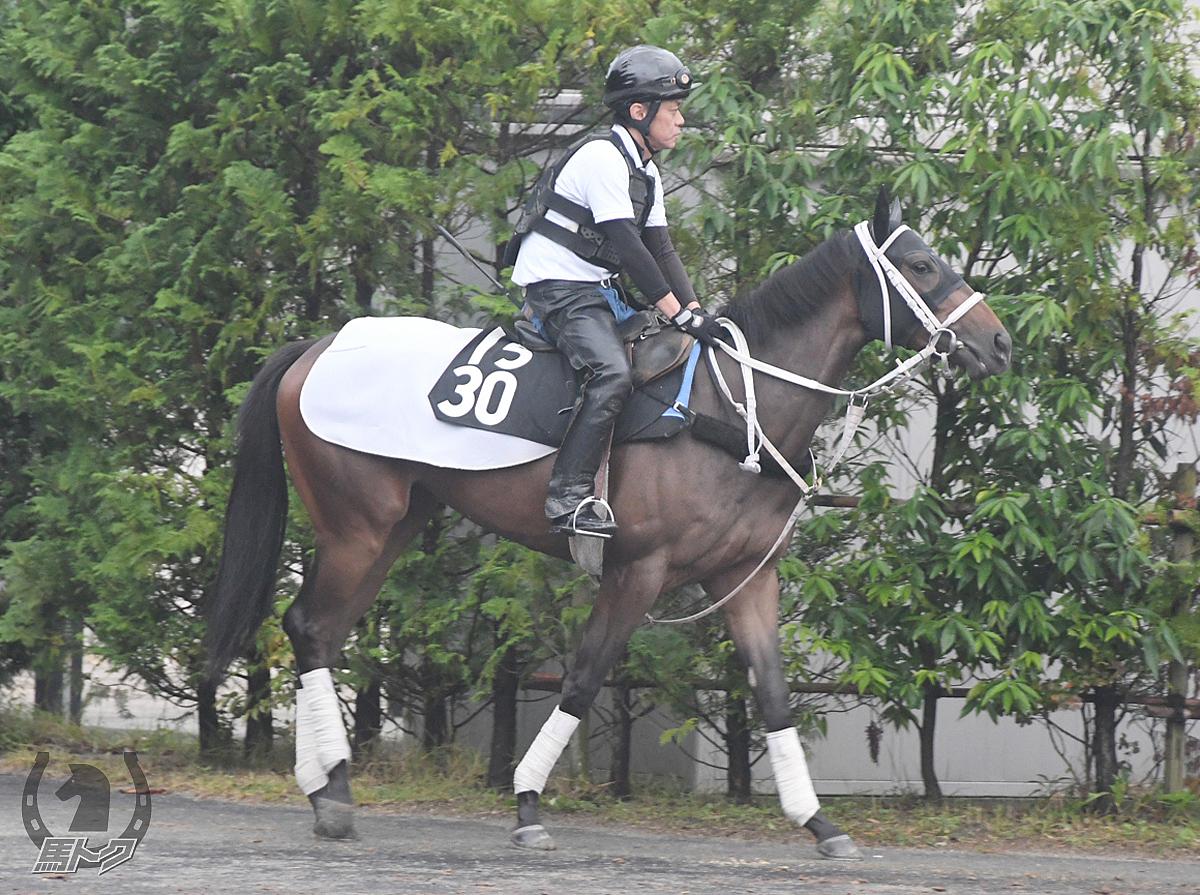 ルーナクオーレの馬体写真