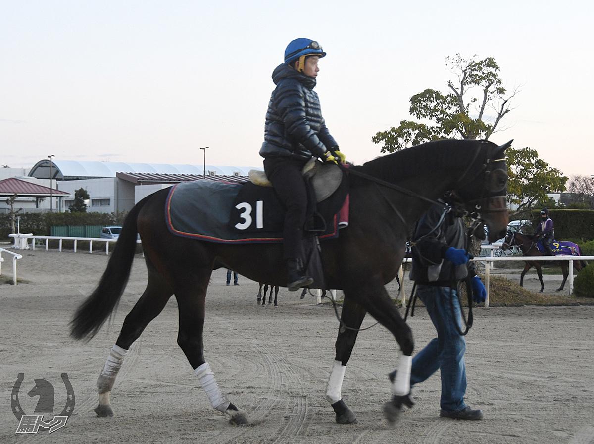 アスクフラッシュの馬体写真