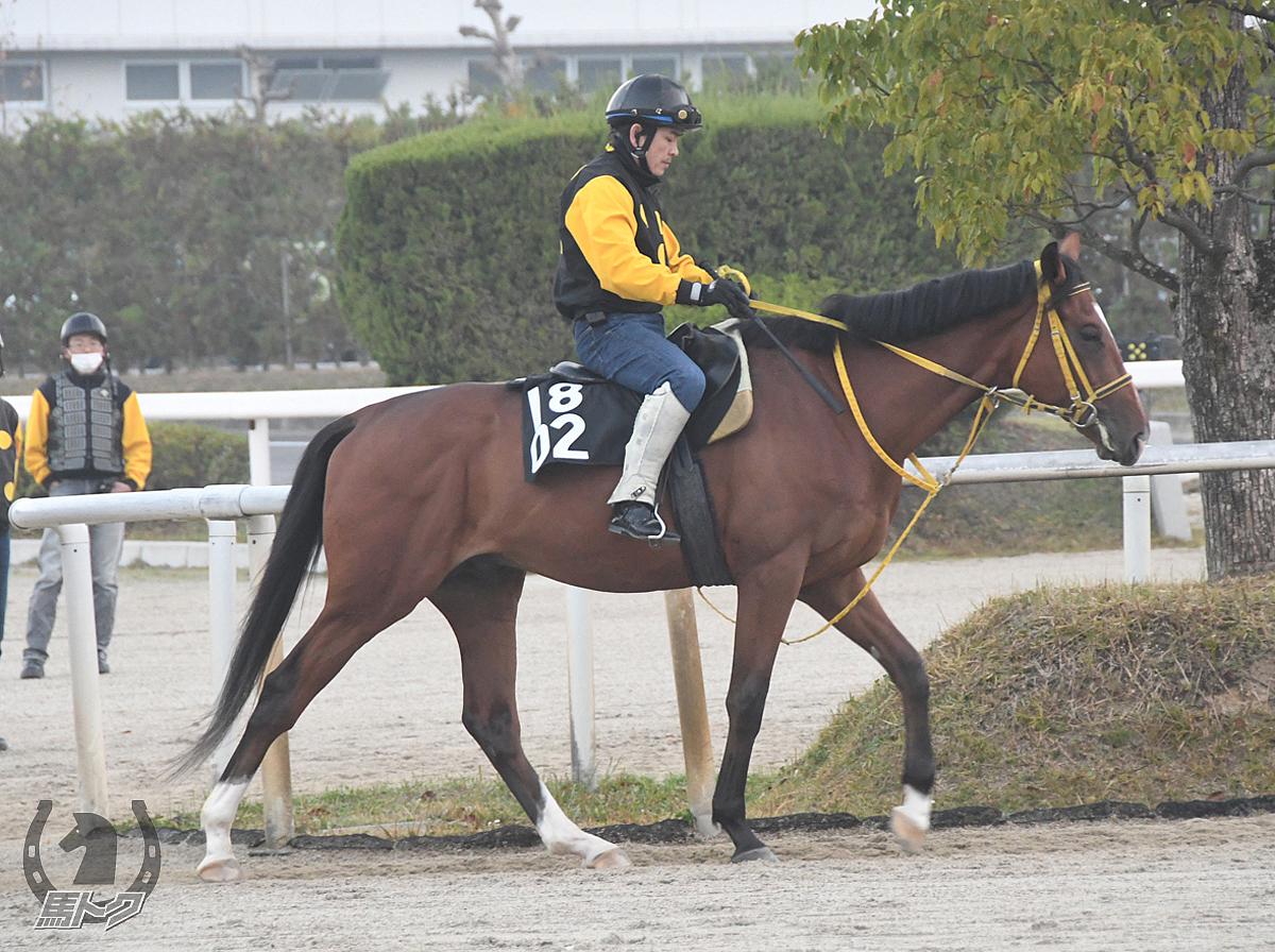 ワイドヴィントの馬体写真
