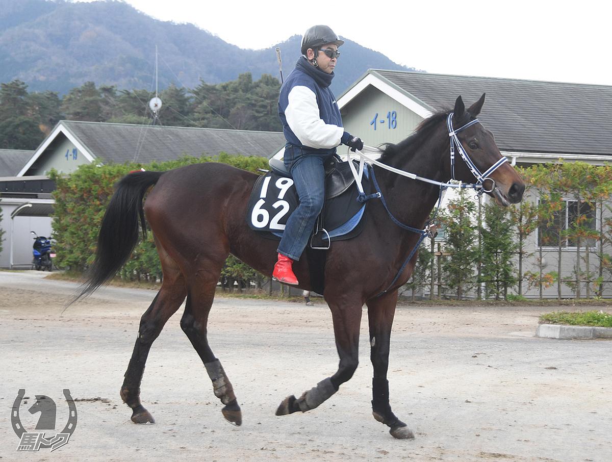 レンジャーガールの馬体写真