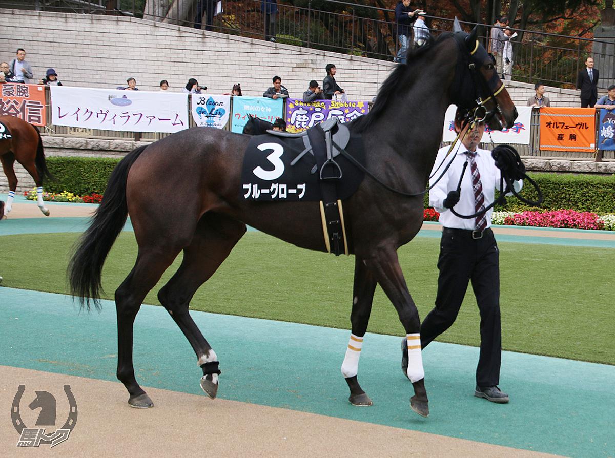 ブルーグローブの馬体写真