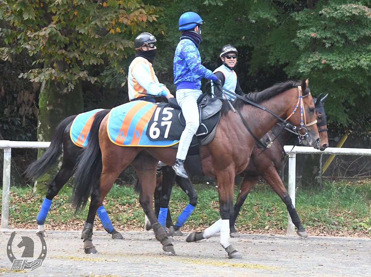 カズブランパンの馬体写真