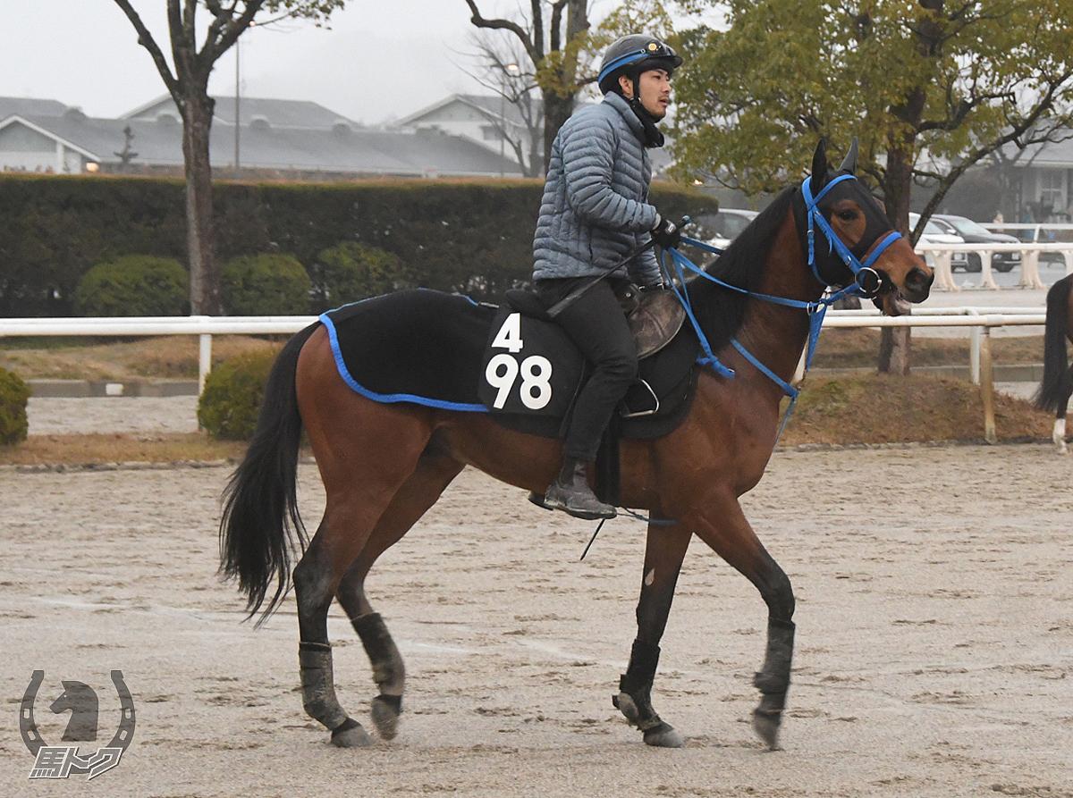 スズカデューの馬体写真