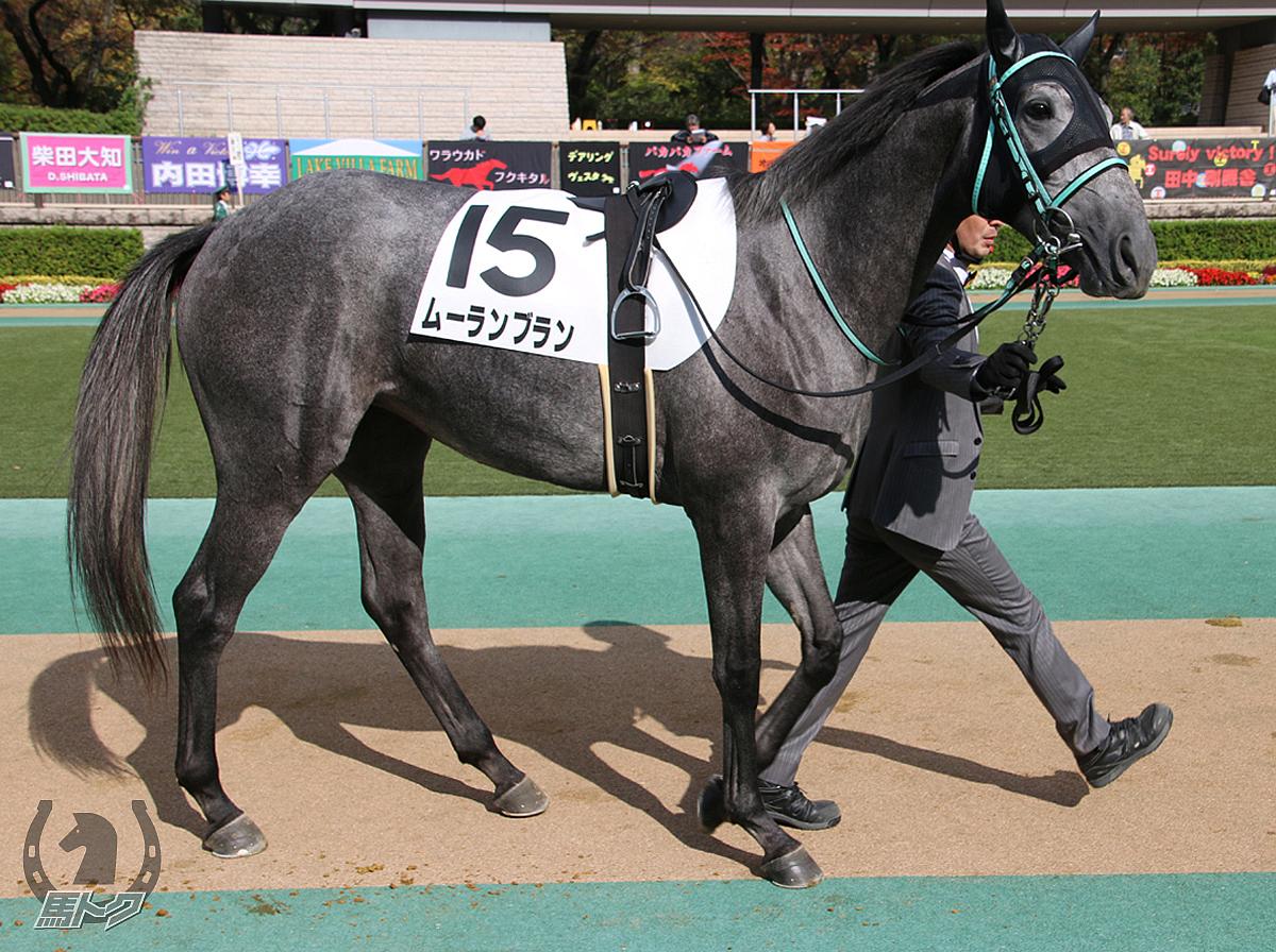 ムーランブランの馬体写真