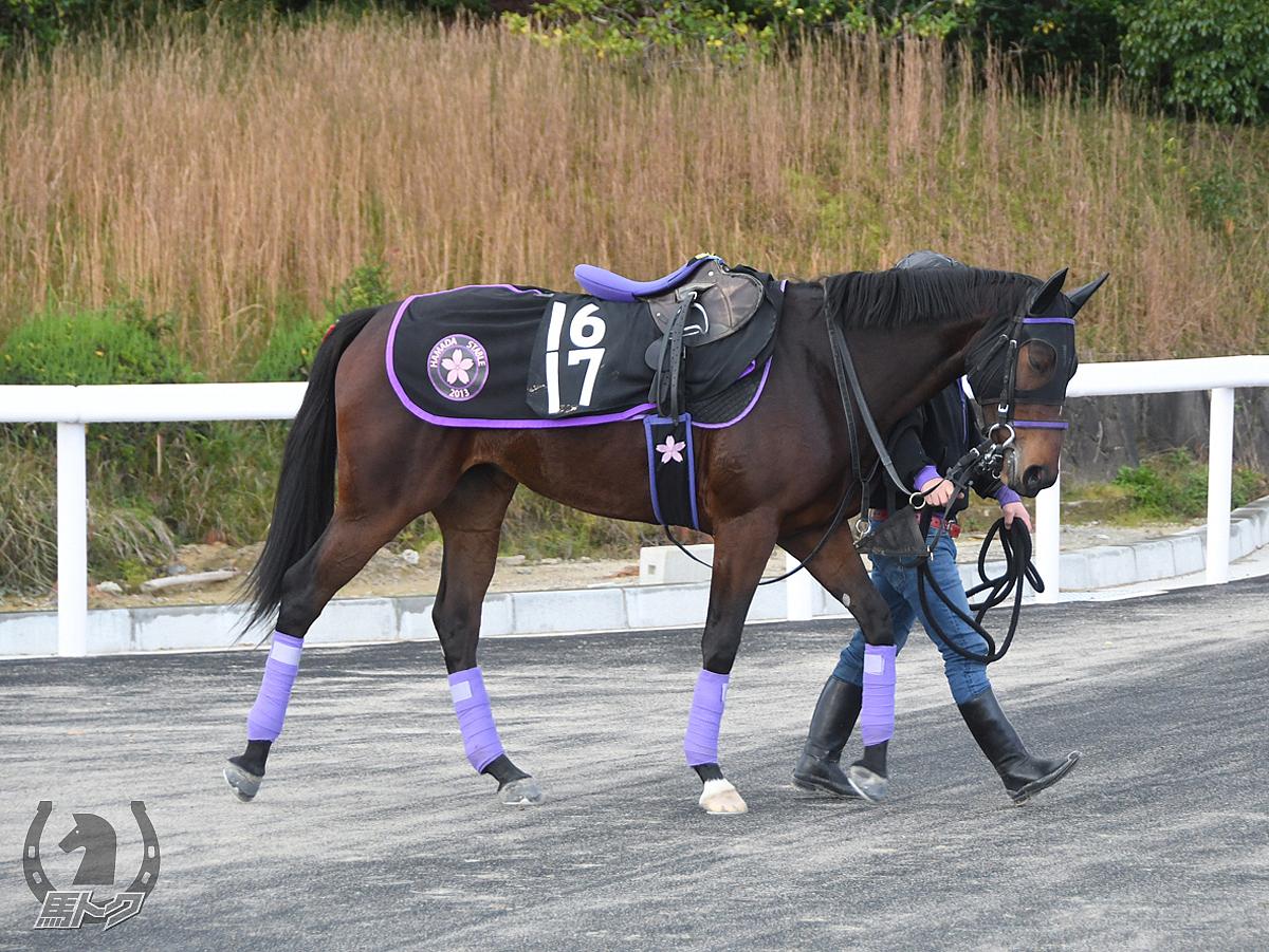 フュラーの馬体写真