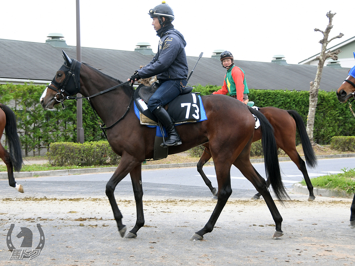 エニフの馬体写真