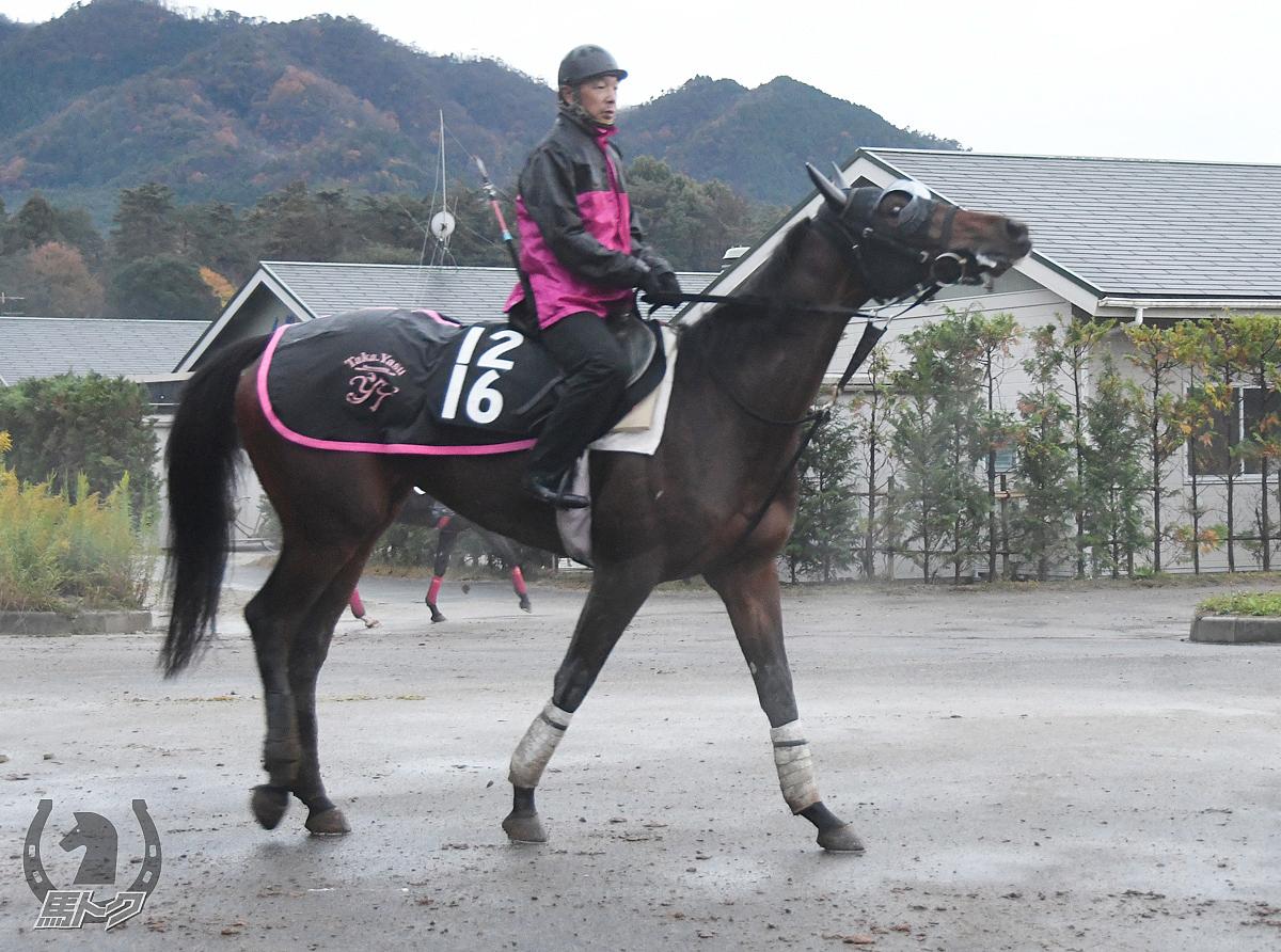 ミッキーバラードの馬体写真