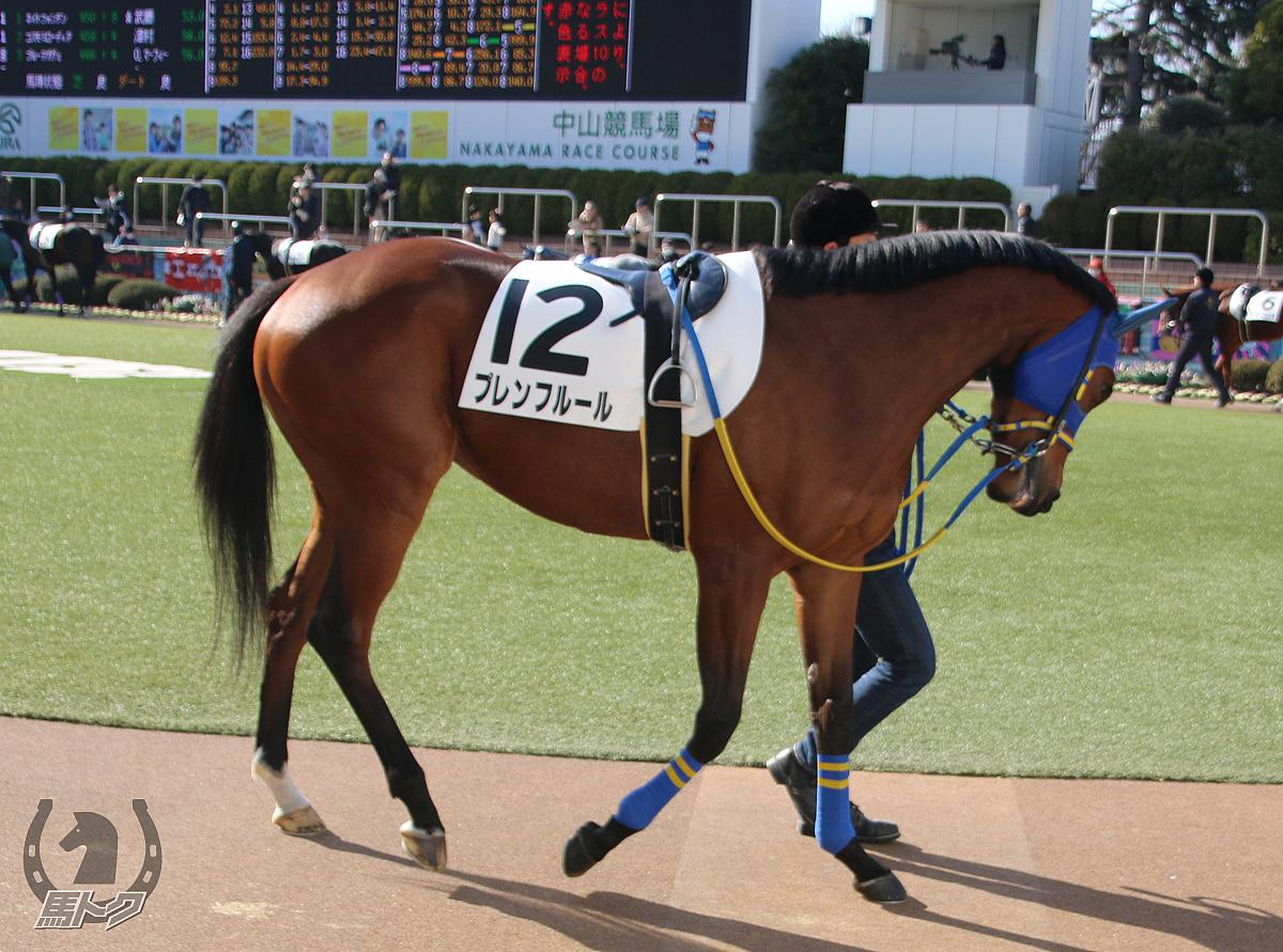 プレンフルールの馬体写真