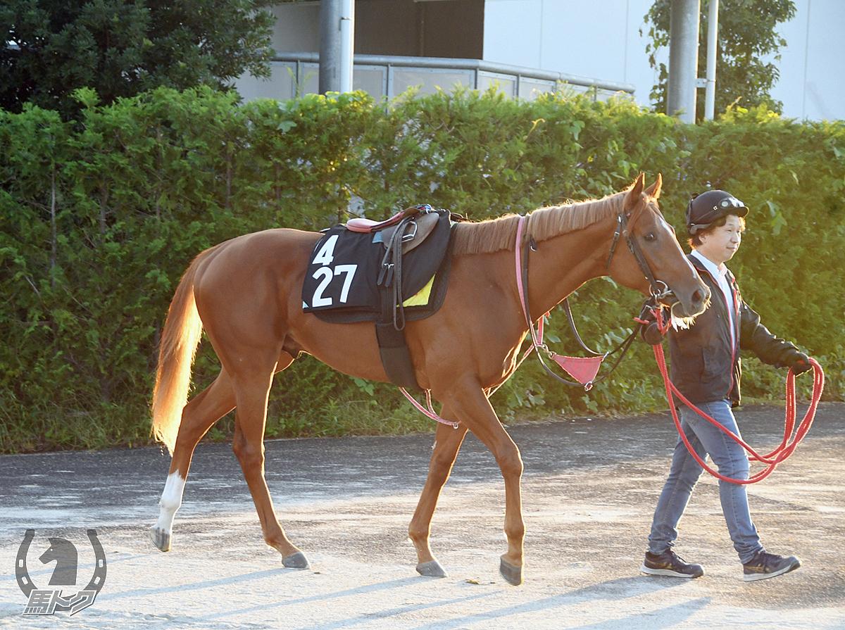シックザールの馬体写真