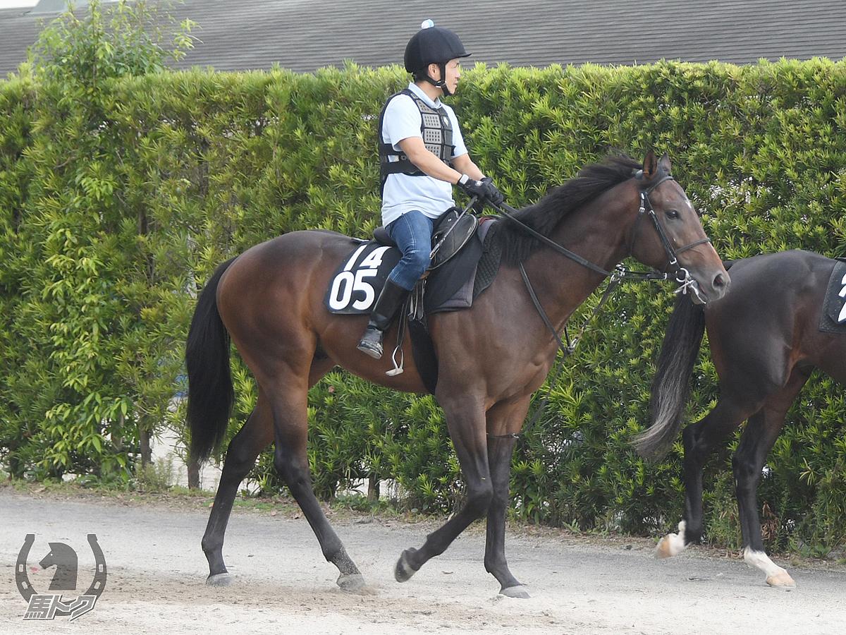 ガバナンスコードの馬体写真