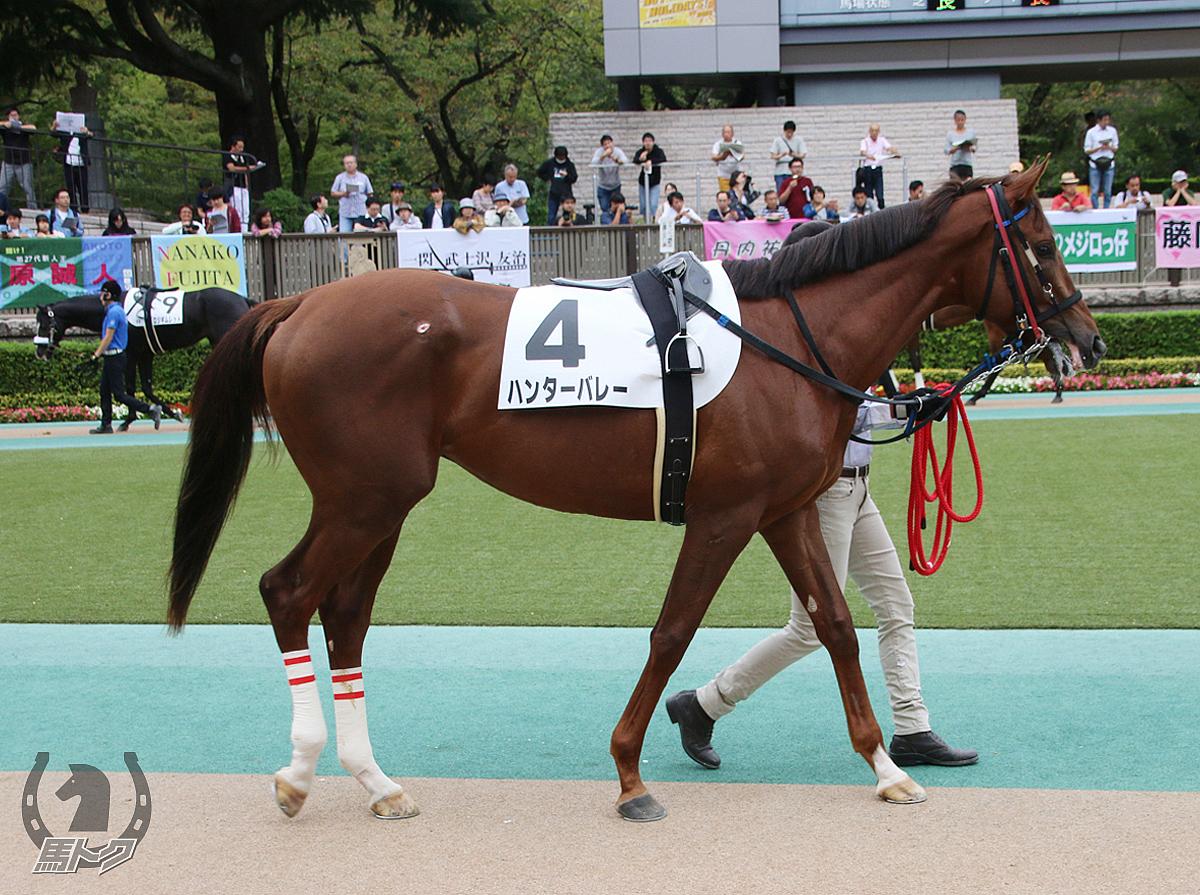 ハンターバレーの馬体写真