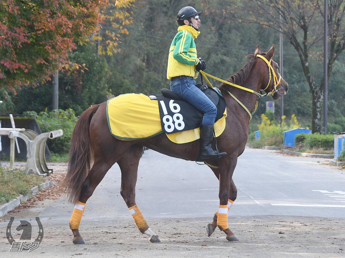 スマートアテナの馬体写真