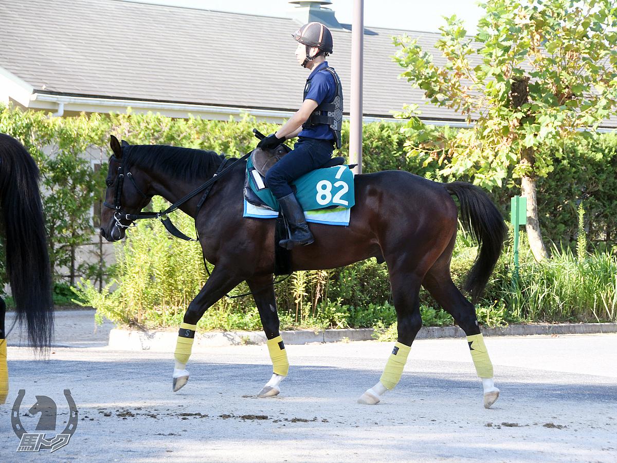スマートレムリアの馬体写真