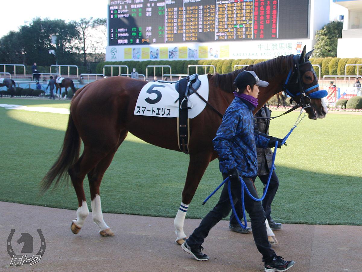 スマートエリスの馬体写真