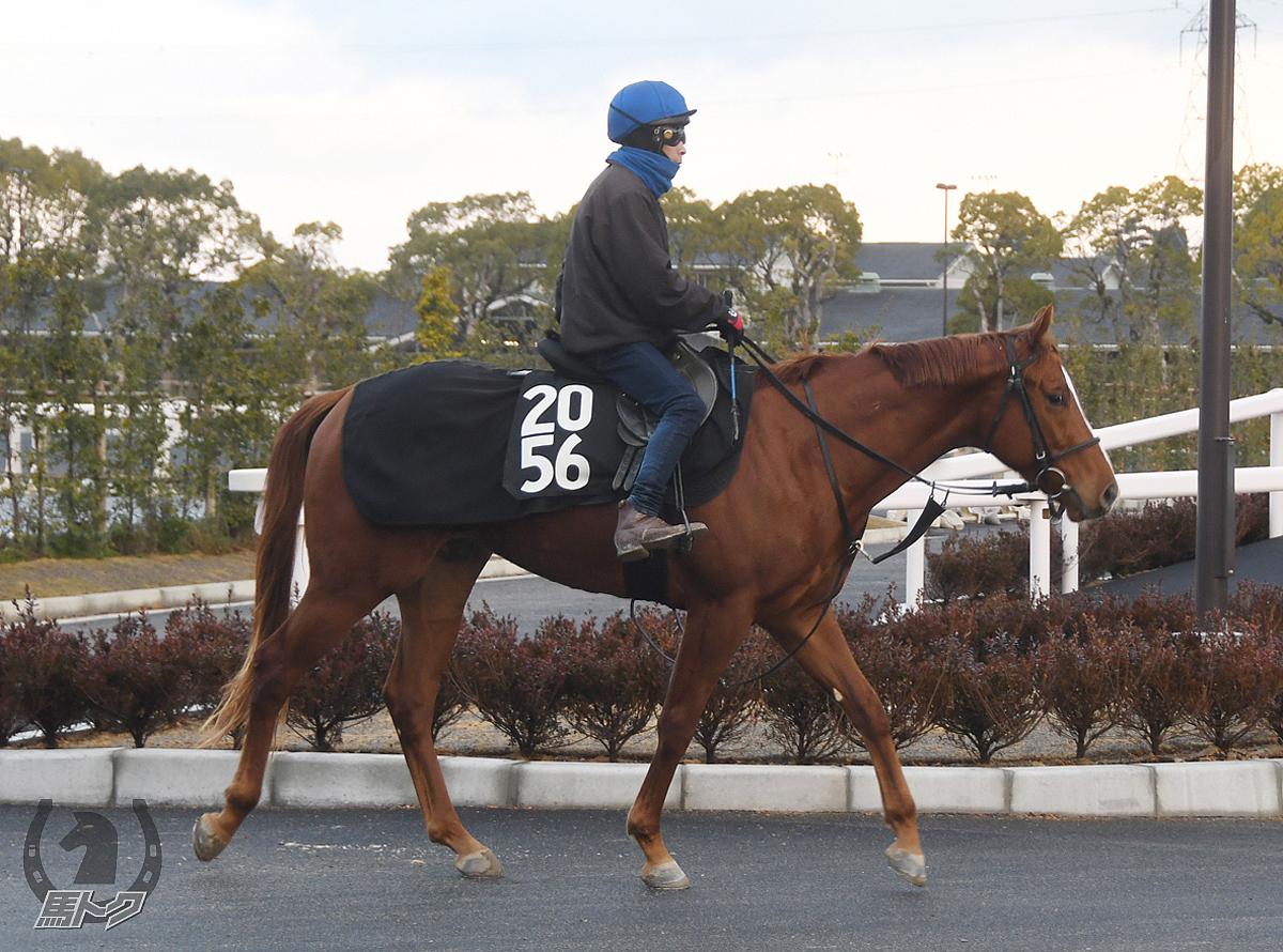 シゲルネコメイシの馬体写真