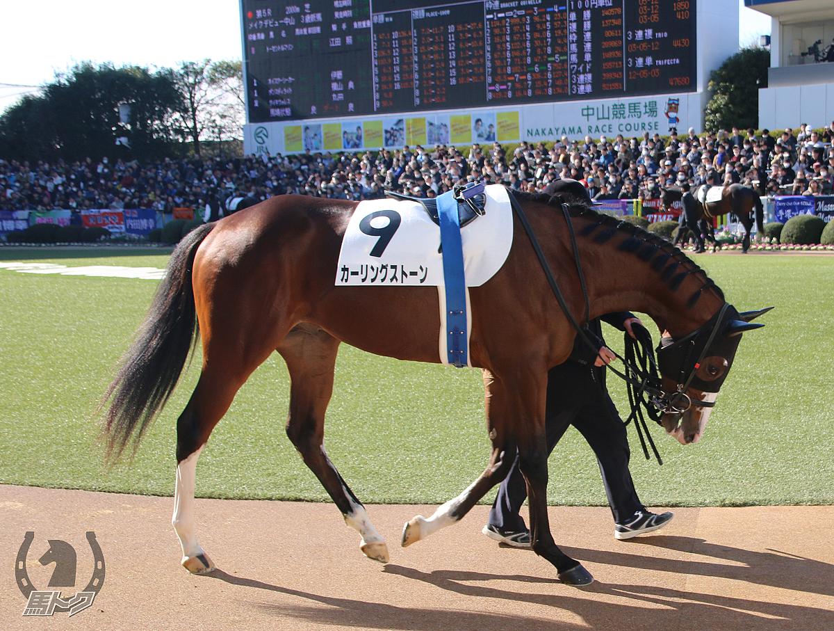 カーリングストーンの馬体写真