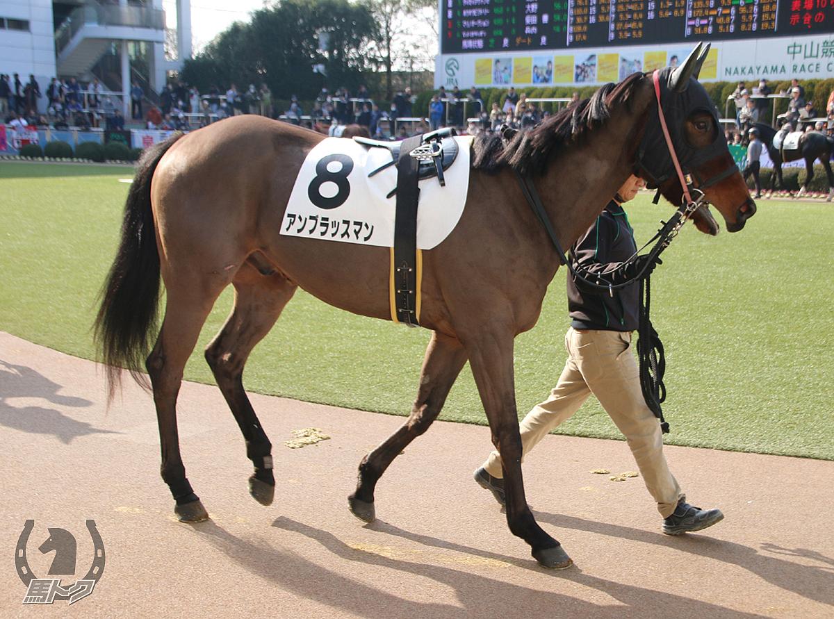 アンブラッスマンの馬体写真