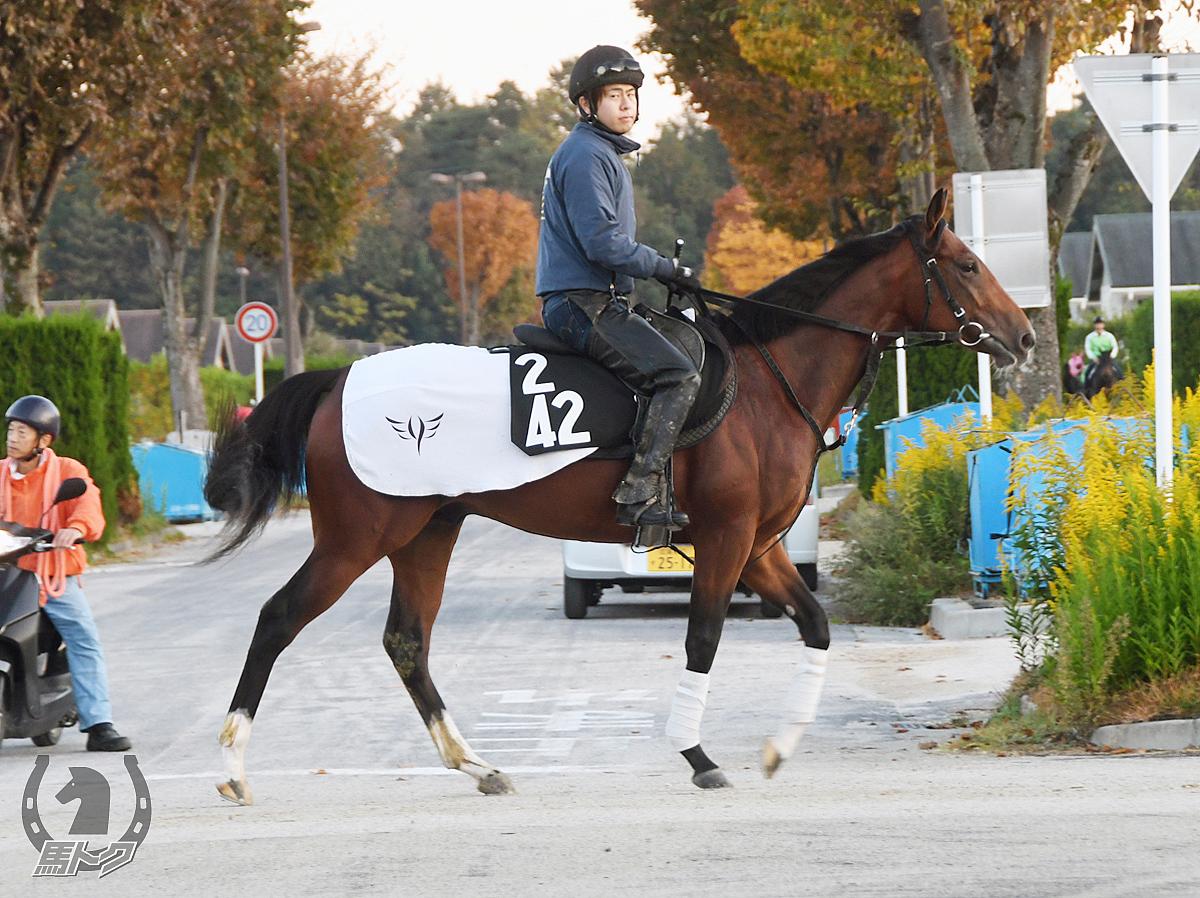 カレングロリアーレの馬体写真