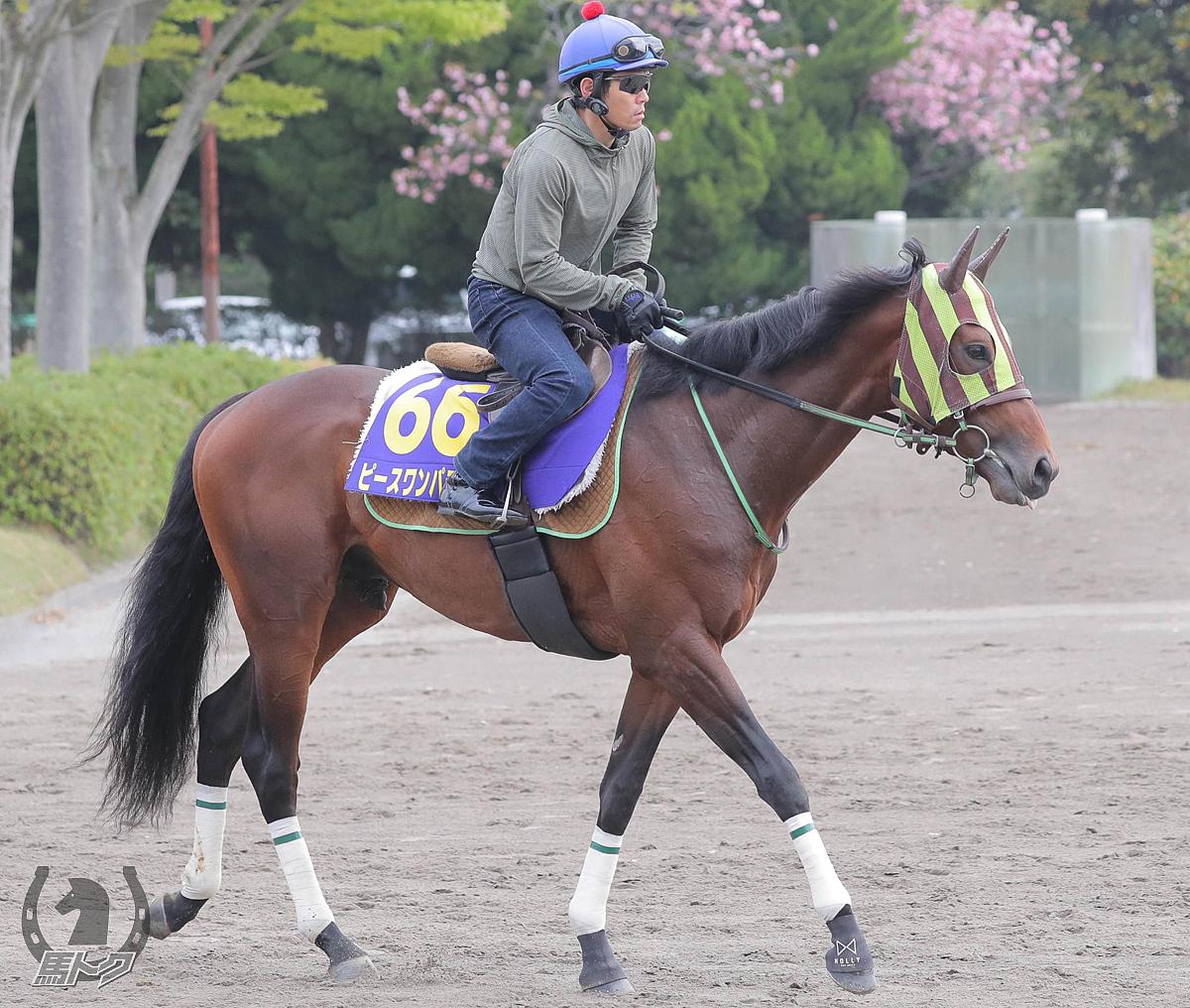 ピースワンパラディの馬体写真