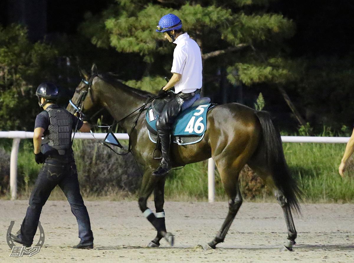 ウインクルマリヒメの馬体写真