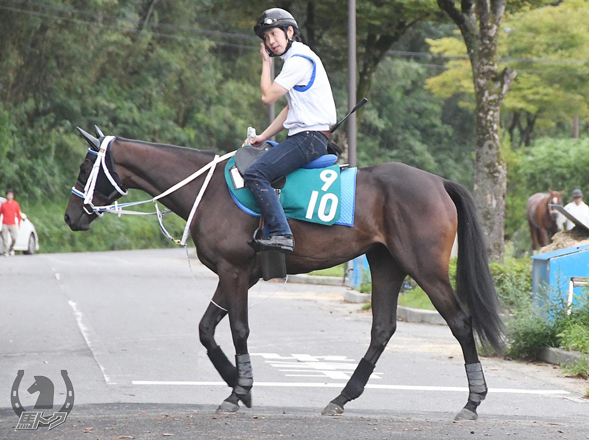 ルタンブルの馬体写真