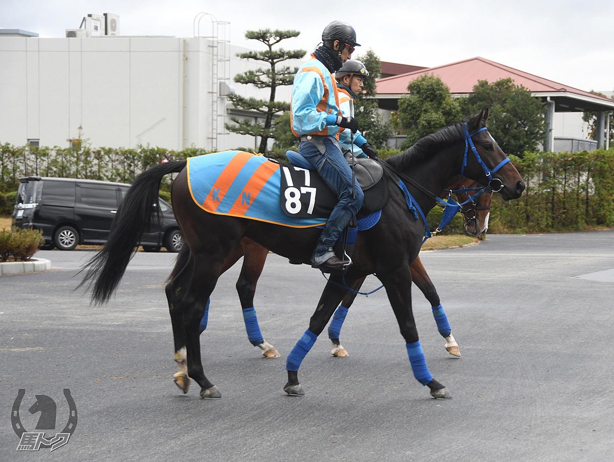 テディボーイの馬体写真