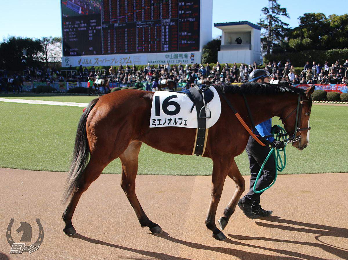 ミエノオルフェの馬体写真
