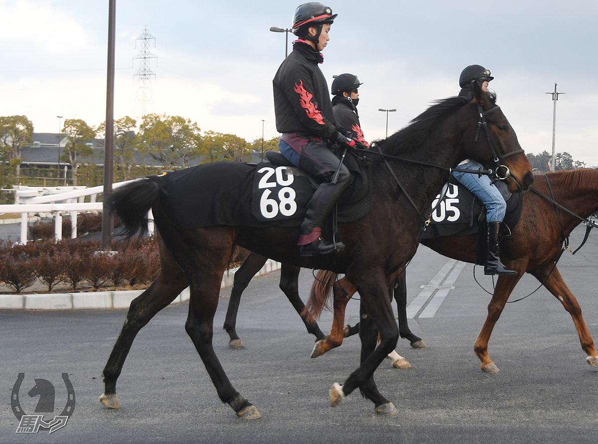 サンマルエトワールの馬体写真