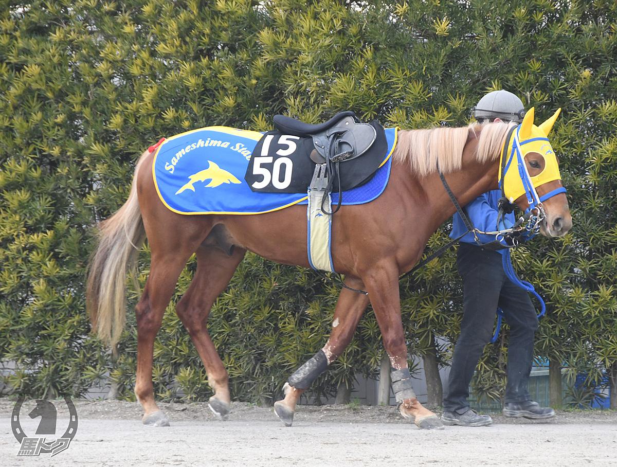 レシプロケイトの馬体写真