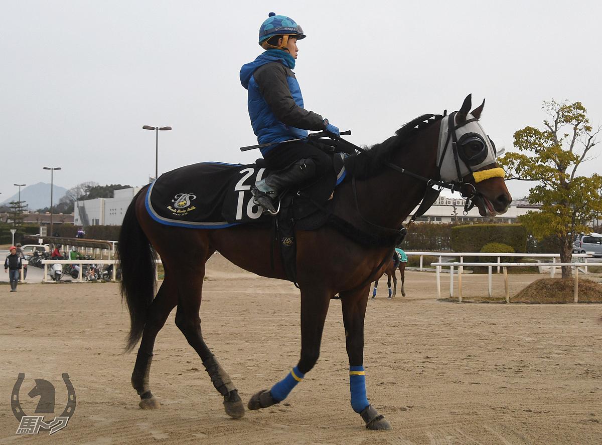 アモレッタの馬体写真