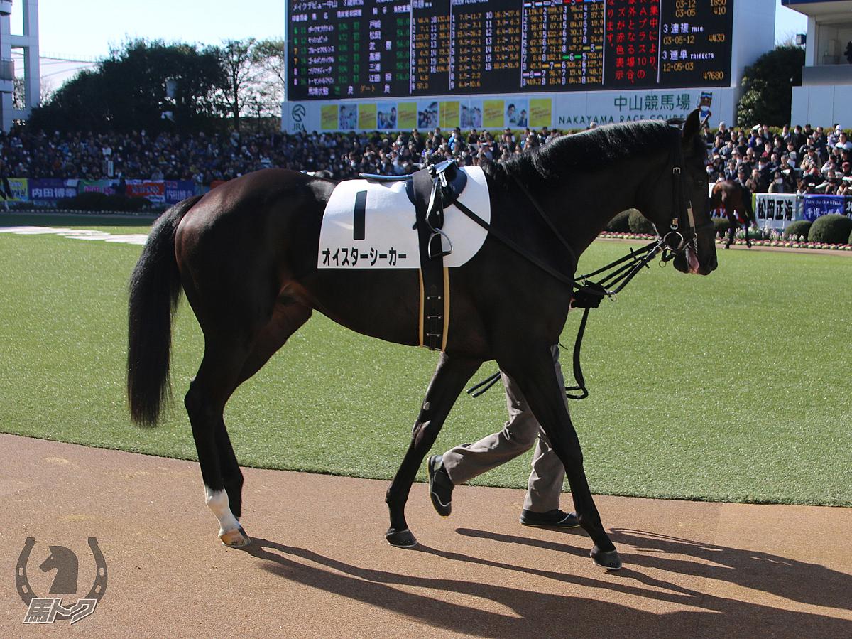 オイスターシーカーの馬体写真